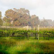 zinfandel-block-looking-east.jpg