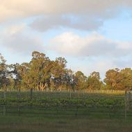 zinfandel-block-looking-north-east2.jpg